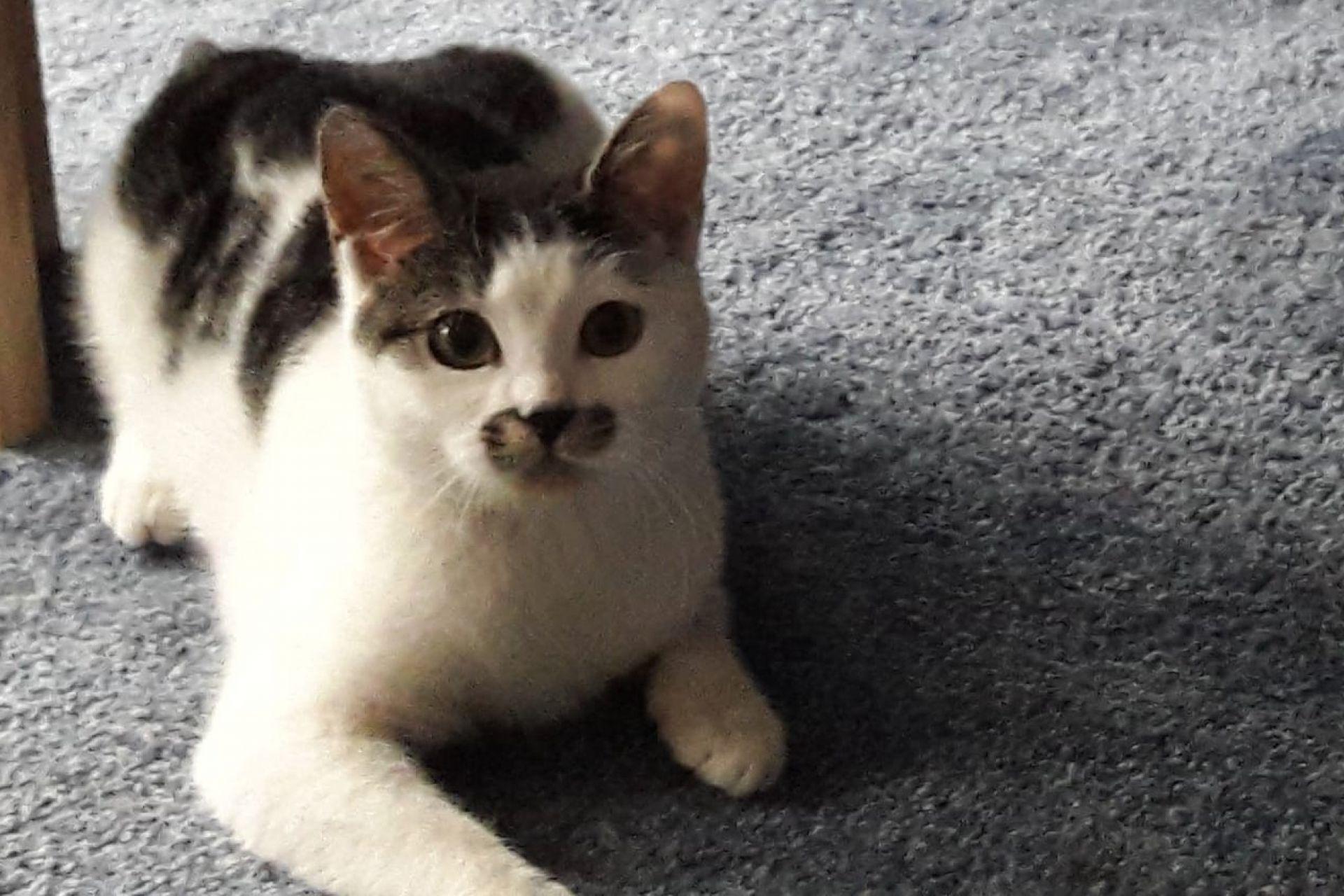 Kitten Dolly 1074732