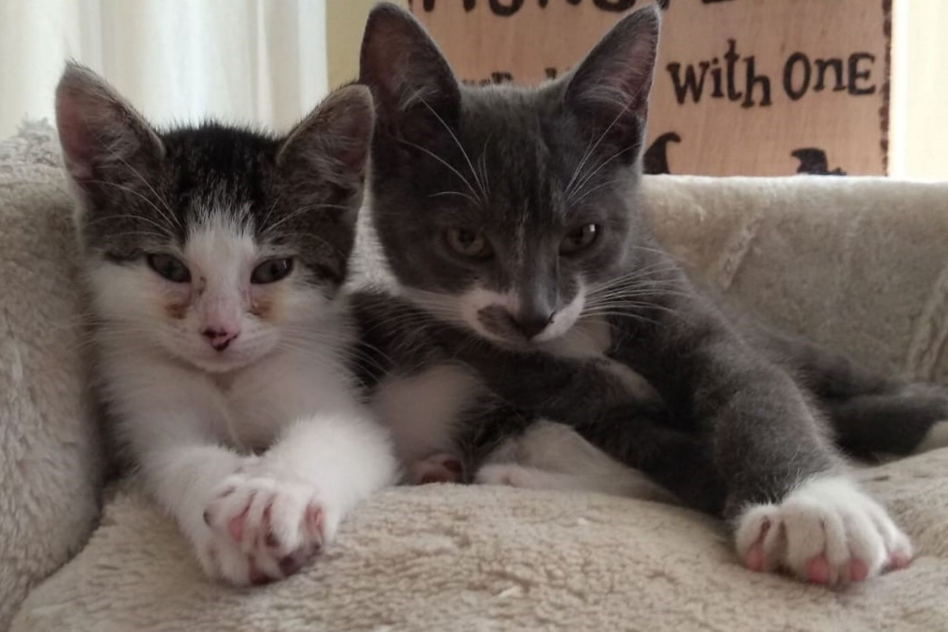 Kittens Frummel Poesje En Frottel Kater Dierenasiel Nu