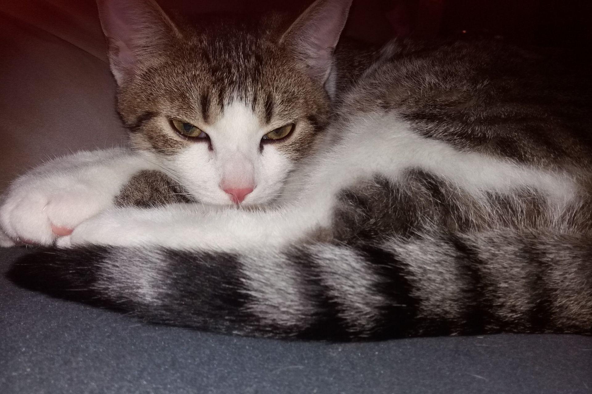 Cyperse kat Amsterdam-West vermist op 1 januari 2019