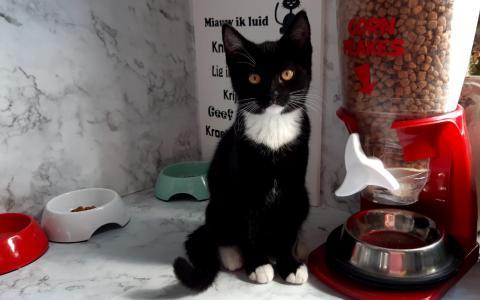 Kitten Kosmokat 1099109