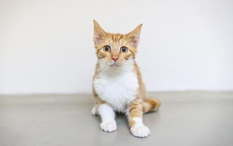 Kitten 1094968