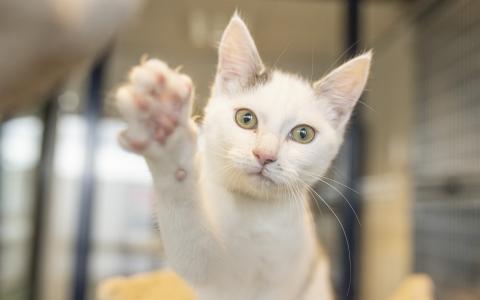 Kitten 1104058