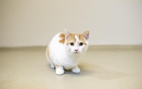 Kitten 1102688
