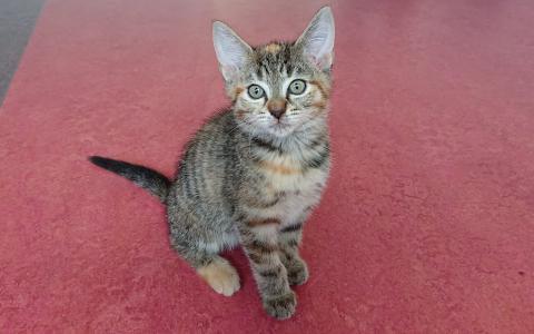 kitten Clare