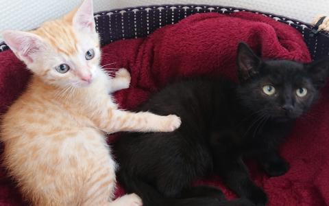 kittens Reddy en Canun