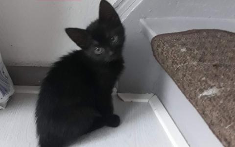 kitten Lexa