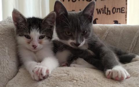 kittens Frummel, poesje en Frottel kater